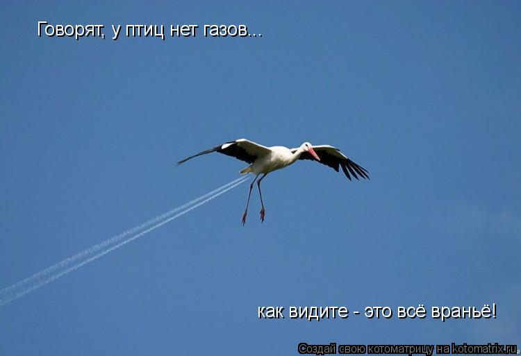 Котоматрица: Говорят, у птиц нет газов... как видите - это всё враньё!
