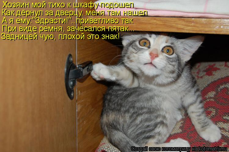 "Котоматрица: Хозяин мой тихо к шкафу подошел Как дёрнул за дверцу, меня там нашел А я ему:""Здрасти!""..приветливо так При виде ремня, зачесался пятак... Задни"