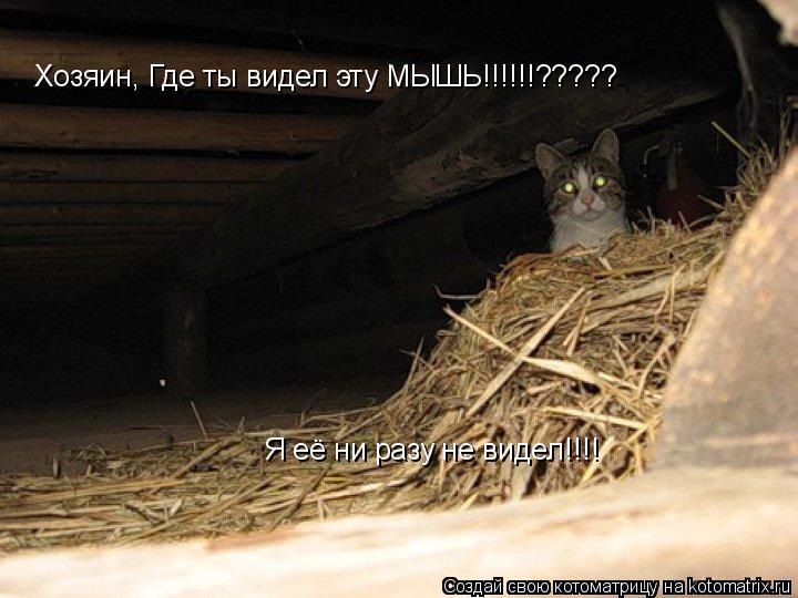 Котоматрица: Хозяин, Где ты видел эту МЫШЬ!!!!!!????? Я её ни разу не видел!!!!