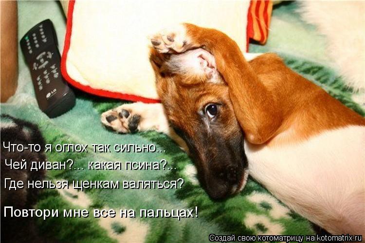 Котоматрица: Что-то я оглох так сильно... Чей диван?... какая псина?... Где нельзя щенкам валяться? Повтори мне все на пальцах!