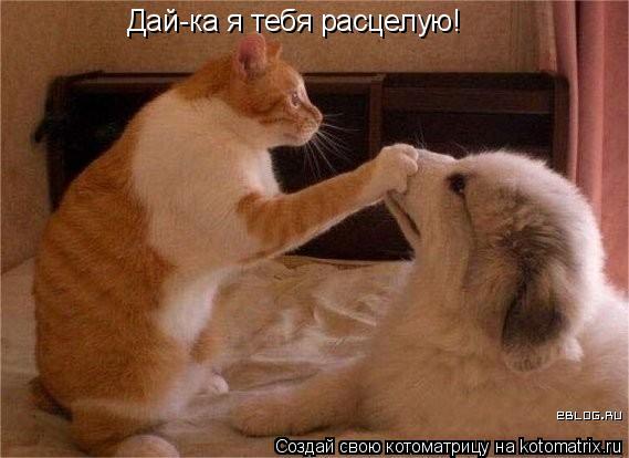 Котоматрица: Дай-ка я тебя расцелую!