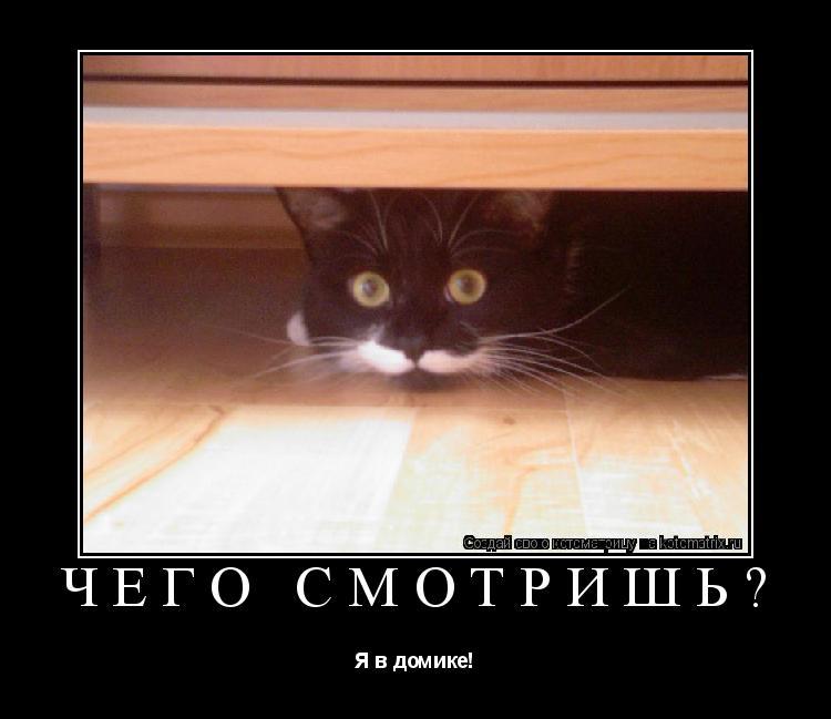 Котоматрица: Чего смотришь? Я в домике!