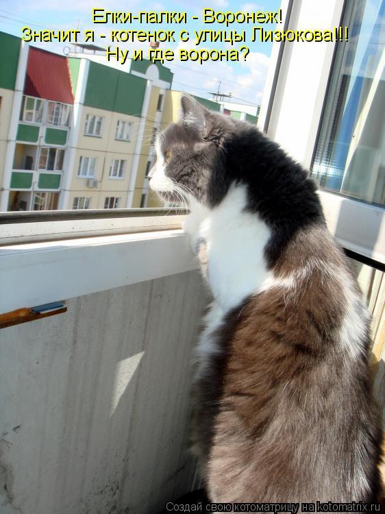 Котоматрица: Елки-палки - Воронеж! Значит я - котенок с улицы Лизюкова!!! Ну и где ворона?