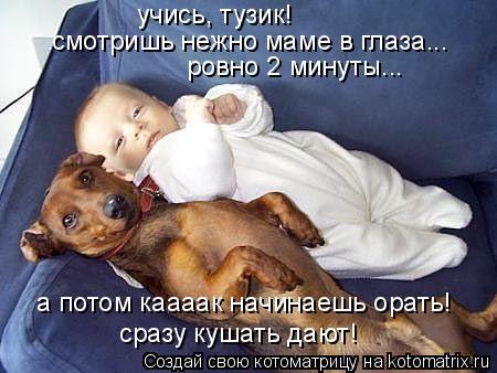 Котоматрица: учись, тузик! смотришь нежно маме в глаза... ровно 2 минуты... а потом каааак начинаешь орать! сразу кушать дают!