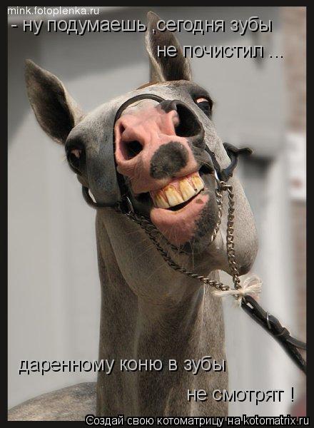 Котоматрица: - ну подумаешь ,сегодня зубы  не почистил ...  даренному коню в зубы  не смотрят !