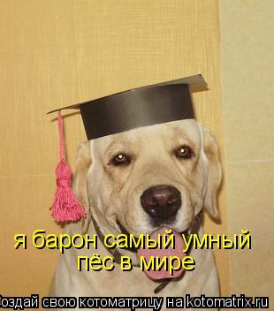 Котоматрица: я барон самый умный  пёс в мире