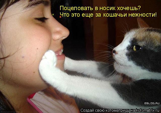 Котоматрица: Что это еще за кошачьи нежности!  Поцеловать в носик хочешь?