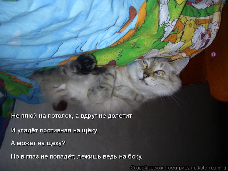 Котоматрица: Не плюй на потолок, а вдруг не долетит И упадёт противная на щёку. А может на щеку? Но в глаз не попадёт, лежишь ведь на боку.