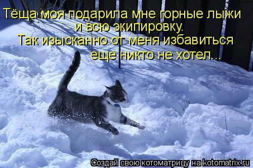 Котоматрица: Тёща моя подарила мне горные лыжи  и всю экипировку.   Так изысканно от меня избавиться  еще никто не хотел...