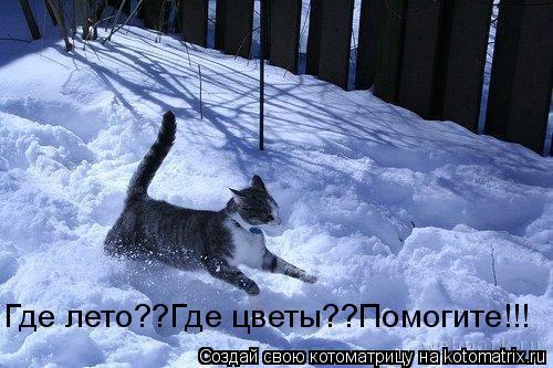 Котоматрица: Где лето??Где цветы??Помогите!!!