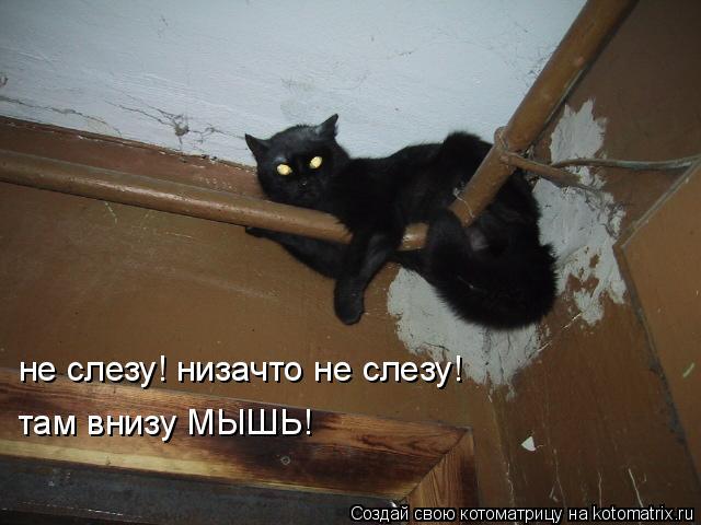 Котоматрица: не слезу! низачто не слезу! там внизу МЫШЬ!