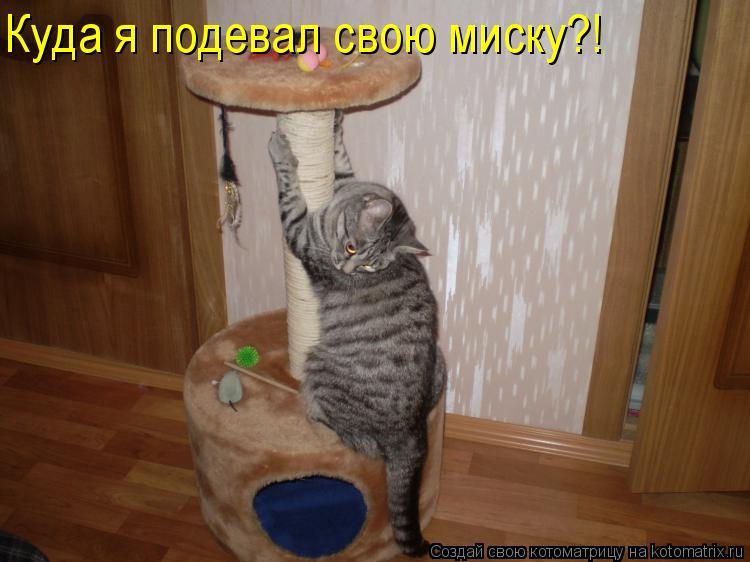 Котоматрица: Куда я подевал свою миску?!