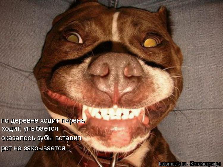 Котоматрица: по деревне ходит парень ходит, улыбается оказалось зубы вставил рот не закрывается...