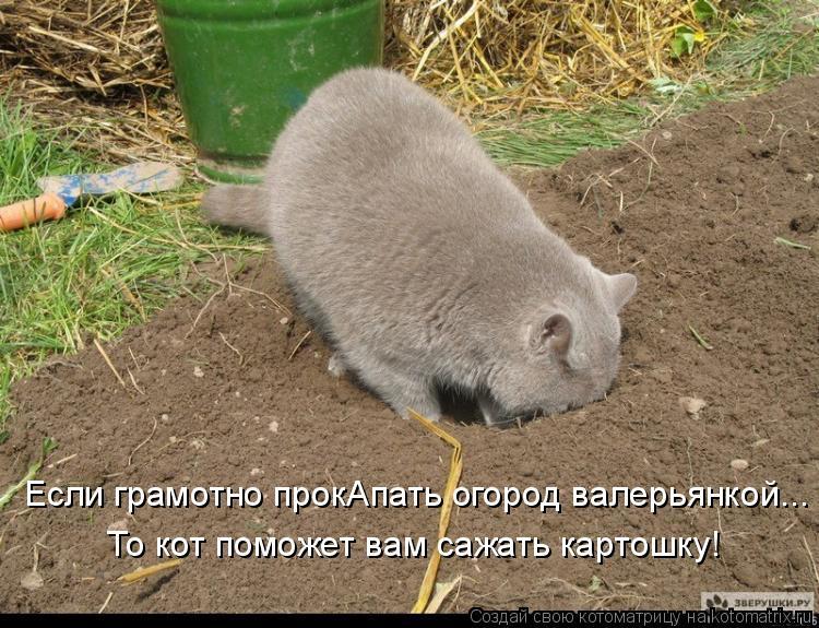 Котоматрица: Если грамотно прокАпать огород валерьянкой... То кот поможет вам сажать картошку!