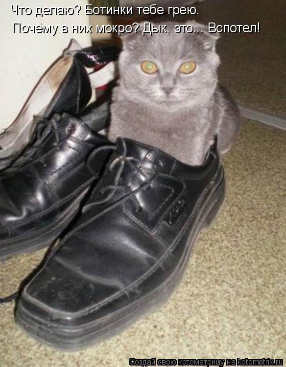 Котоматрица: Что делаю? Ботинки тебе грею. Почему в них мокро? Дык, это... Вспотел!