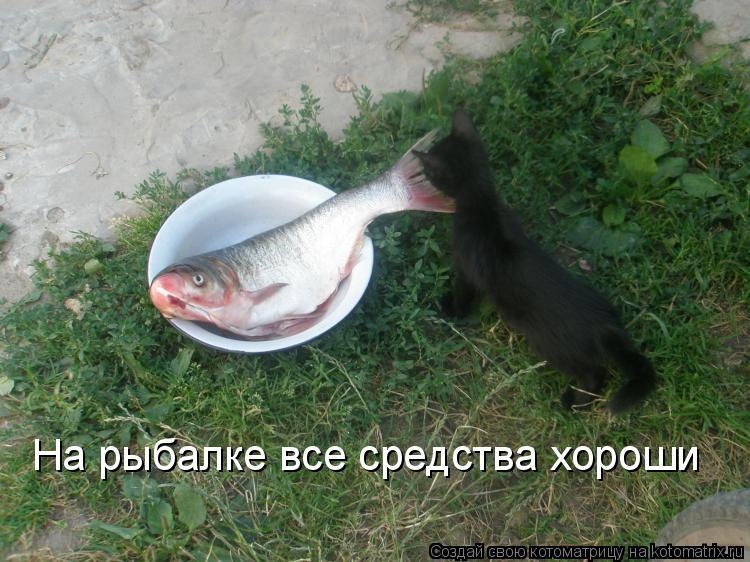 Котоматрица: На рыбалке все средства хороши