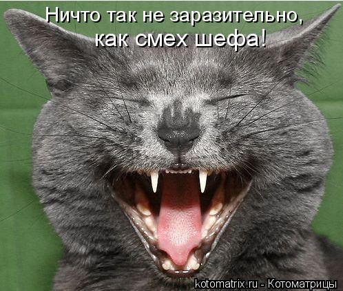 Котоматрица: Ничто так не заразительно,  как смех шефа!