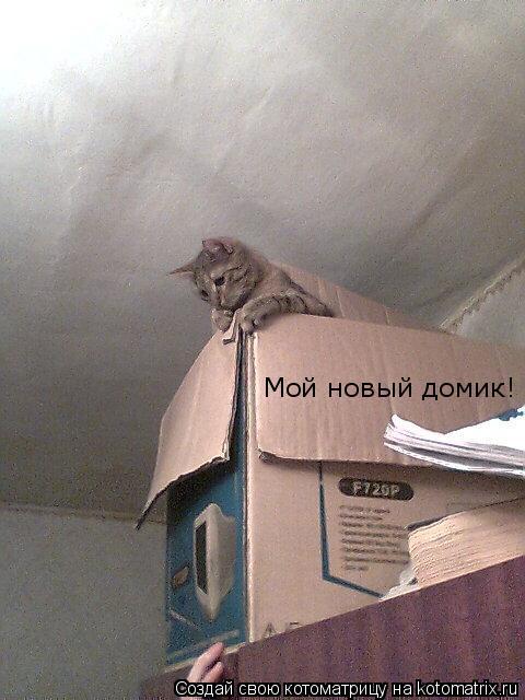 Котоматрица: Мой новый домик!