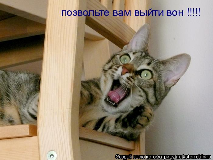 Котоматрица: позвольте вам выйти вон !!!!!