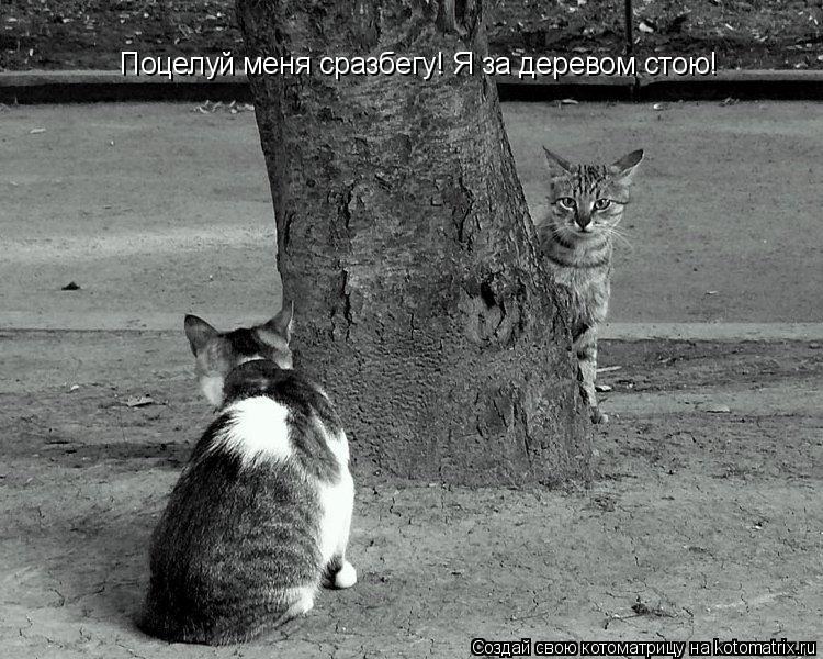 Котоматрица: Поцелуй меня сразбегу! Я за деревом стою!