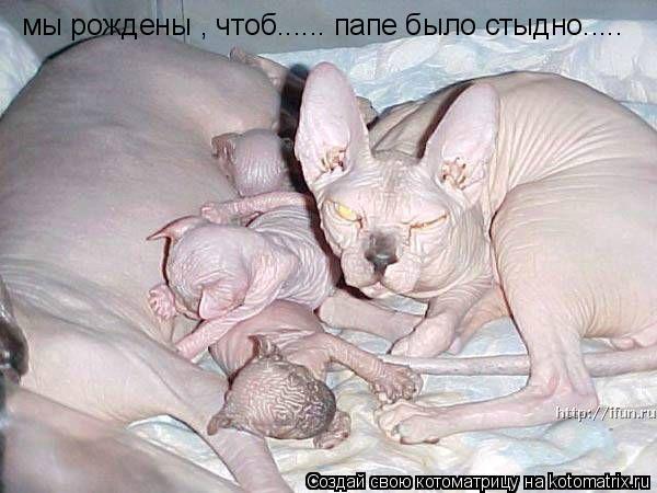 Котоматрица: мы рождены , чтоб...... папе было стыдно.....