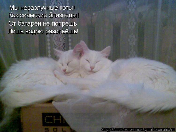 Котоматрица: Мы неразлучные коты! Как сиамские близнецы! От батареи не попрешь Лишь водою разольёшь!