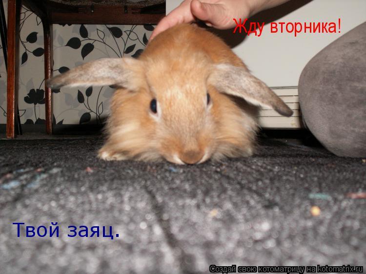 Котоматрица: Жду вторника!  Твой заяц.