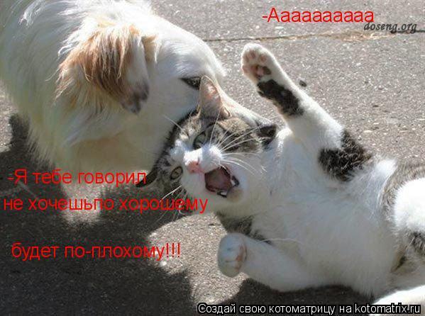 Котоматрица: -Аааааааааа -Я тебе говорил не хочешьпо хорошему будет по-плохому!!!
