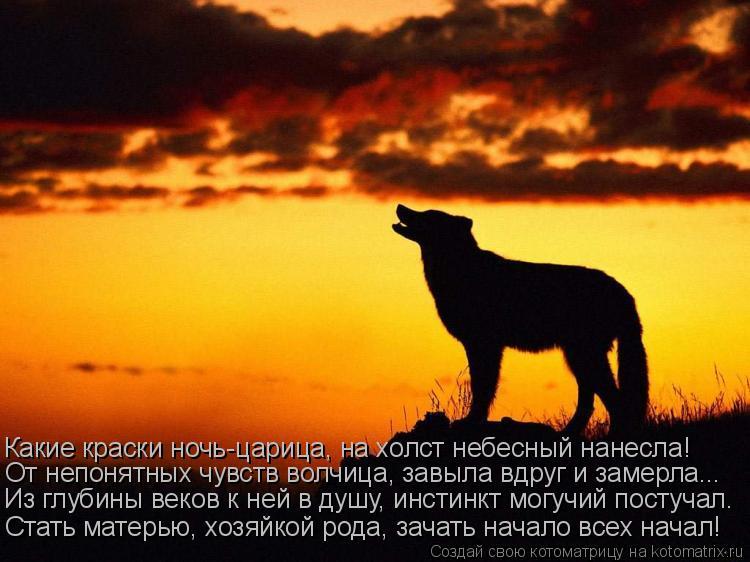 Котоматрица: Какие краски ночь-царица, на холст небесный нанесла! От непонятных чувств волчица, завыла вдруг и замерла... Из глубины веков к ней в душу, ин