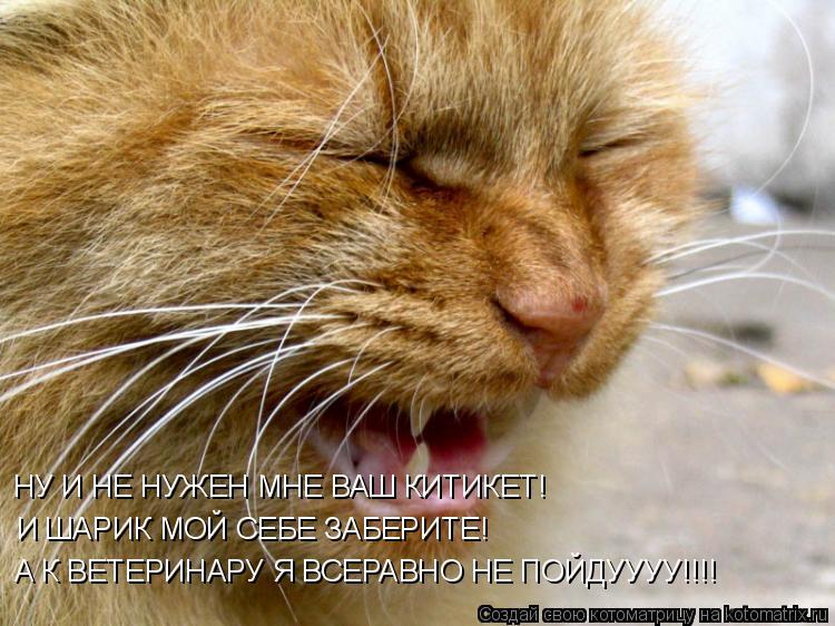 Котоматрица: НУ И НЕ НУЖЕН МНЕ ВАШ КИТИКЕТ! И ШАРИК МОЙ СЕБЕ ЗАБЕРИТЕ! А К ВЕТЕРИНАРУ Я ВСЕРАВНО НЕ ПОЙДУУУУ!!!!
