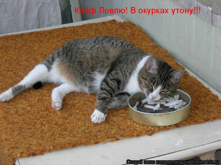 Вредны ли беременным кошки