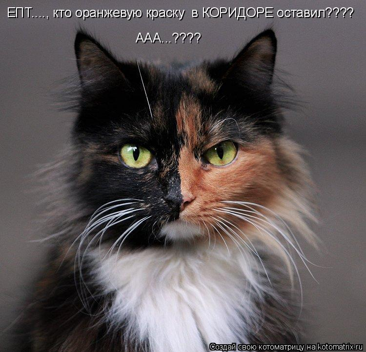 Котоматрица: ЕПТ...., кто оранжевую краску  в КОРИДОРЕ оставил????  ААА...????