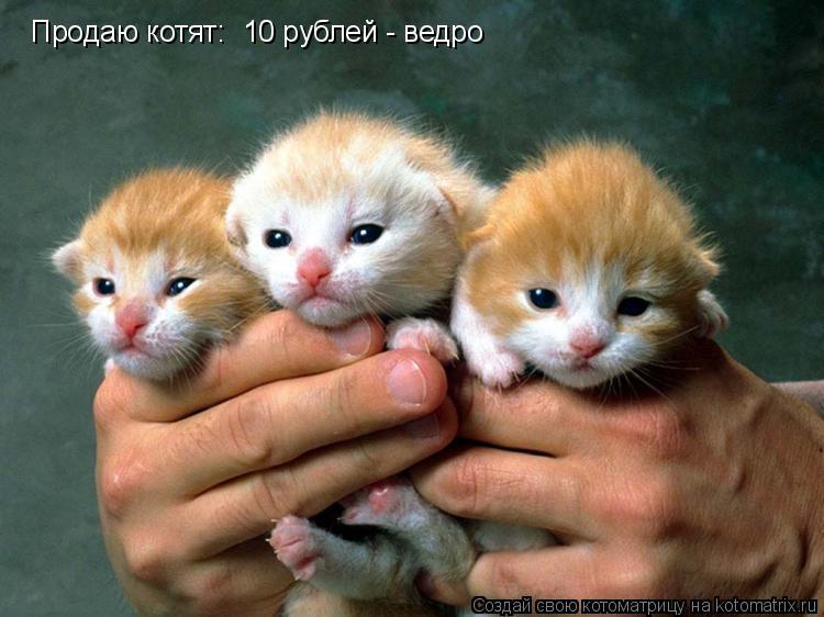Котоматрица: Продаю котят: 10 рублей - ведро