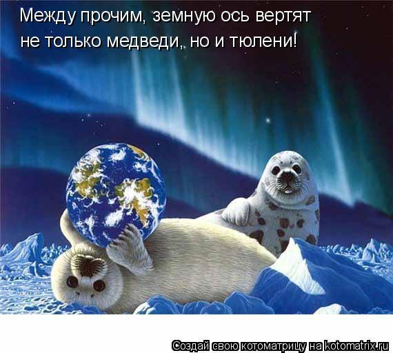 Котоматрица: Между прочим, земную ось вертят  не только медведи, но и тюлени!