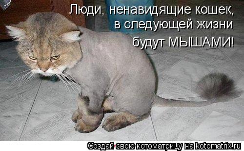 Котоматрица: Люди, ненавидящие кошек,  в следующей жизни   будут МЫШАМИ!
