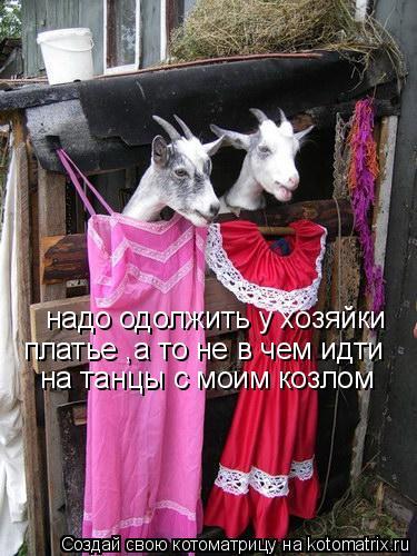 Котоматрица: надо одолжить у хозяйки  платье ,а то не в чем идти  на танцы с моим козлом