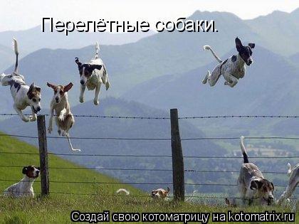 Котоматрица: Перелётные собаки.