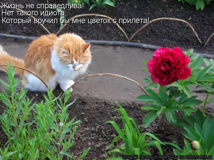 Котоматрица: Жизнь не справедлива! Нет такого идиота, Который вручил бы мне цветок с прилёта!