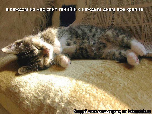 Котоматрица: в каждом из нас спит гений и с каждым днем все крепче