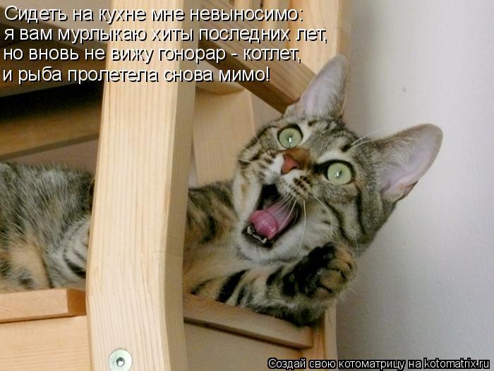 Котоматрица: Сидеть на кухне мне невыносимо: я вам мурлыкаю хиты последних лет, но вновь не вижу гонорар - котлет, и рыба пролетела снова мимо!