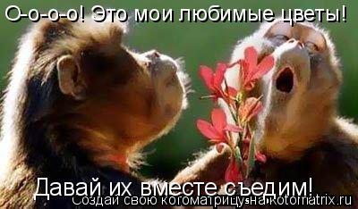 Котоматрица: О-о-о-о! Это мои любимые цветы! Давай их вместе съедим!