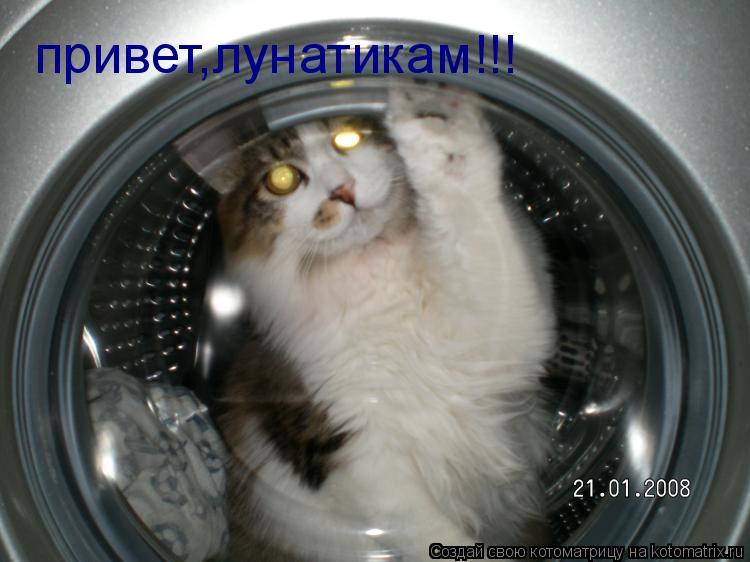 Котоматрица: привет,лунатикам!!!