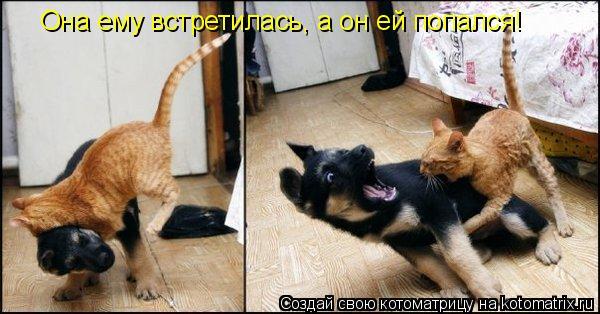 Котоматрица: Она ему встретилась, а он ей попался!