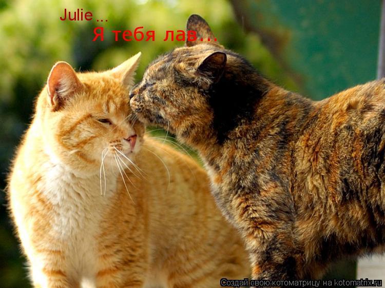 Котоматрица: Julie Я тебя лав... ...