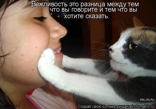 Котоматрица: Вежливость это разница между тем что вы говорите и тем что вы хотите  сказать.