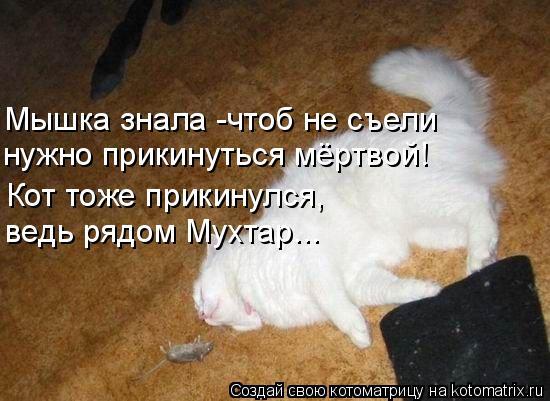 Котоматрица: Мышка знала -чтоб не съели  ведь рядом Мухтар... нужно прикинуться мёртвой! Кот тоже прикинулся,
