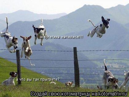 Котоматрица: а что вы так прыгаете? энергетика напилися!!!