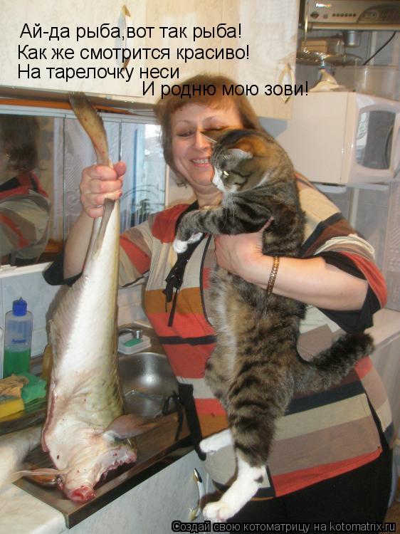 Котоматрица: Ай-да рыба,вот так рыба! Как же смотрится красиво! На тарелочку неси И родню мою зови!