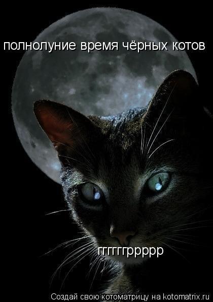 Котоматрица: полнолуние время чёрных котов ггггггррррр