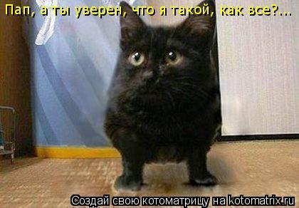 Котоматрица: Пап, а ты уверен, что я такой, как все?...